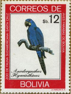 Papagayos de Bolivia Anodorynchus hyacinthinus Guacamayo azul 11/05/81 Bolivia