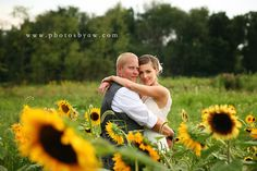 Bride and groom in a field of sunflowers, lingrow farm wedding - Copyright 2015 © Photography by Amanda Wilson www.photosbyaw.com