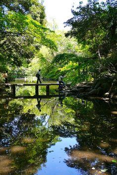 Jardin à l'Université de Tokyo, Japon 752