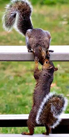 The Chipmunks are coming over. Cute Funny Animals, Cute Baby Animals, Animals And Pets, Wild Animals, Cute Squirrel, Baby Squirrel, Squirrels, Squirrel Pictures, Cute Animal Pictures