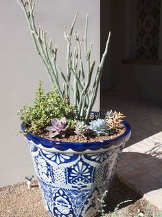 Planting Succulents from www.lowes.com .....A well-filled container using a silver-purple color scheme.