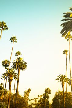 Dreaming of Los Angeles, where the sun is always shining and there's a chance you could bump into Cher Horowitz