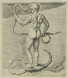 Scorpius, image of Arataea, sive Signa Coelestia: in quibus Astronomicae Speculationes Veterum ad Archetypa Vetustissimi Aratæorum Caesaris Germanici...