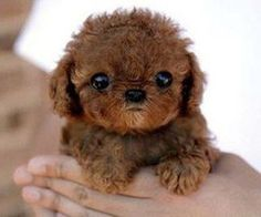 ..this is Chewbaca..as a child..
