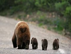 mom & three baby bears lovely pic