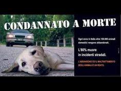 Non Abbandonare Gli Animali Satana Non Lo Farebbe Mai!! La Triste Storia...
