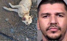 Max sentence for Arizona yob that starved dog till it passed away to get back at ex-girlfriend! -                Hoping to get some attention and eventually hook up again with his former girlfriend, Luis Moreno from Arizona, 38, thought it...