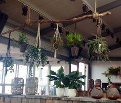 Hangende planten aan grof touw
