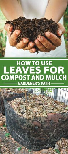 Autumn is the perfect time to start composting with leaves. Instead of sending them to the landfill, leaves can be transformed into black gold for your garden, or even turned into mulch with some simple techniques. Learn more about composting fall leaves now, at Gardener's Path. #composting #autumnleaves #gardenerspath