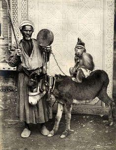 Man monkey and donkey, ca 1900 egypt