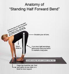 "Anatomy of ""Standing Half Forward Bend"""