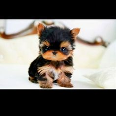 - Click image to find more Puppies Pinterest pins #dogs