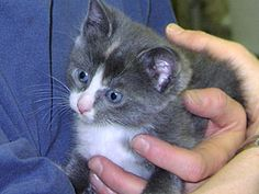 1000 Images About Afca Tnr Feral Cats On Pinterest
