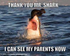 Misunderstood Shark - Imgur