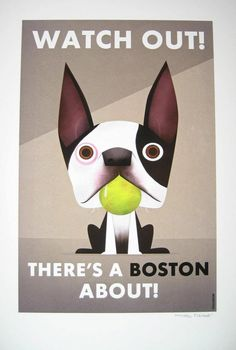 There's a boston about...#dogs #pets #BostonTerriers Facebook.com/sodoggonefunny