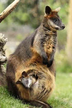 Mãe é sempre incomparável