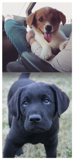 Because it's Monday, enjoy a bunch of pics of adorable pets on their #FirstDayHome.