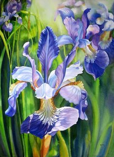 Iris Painting, Painting & Drawing, Watercolor Flowers, Watercolor Paintings, Flower Paintings, Watercolours, Iris Art, Art Aquarelle, Iris Flowers