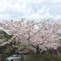 【aeolusyang】さんのInstagramをピンしています。 《#japan##sakura#櫻花#櫻#kyoto#uji#宇治#電車 #cherryblossom #桜 #日本 #nippon #桜 #サクラ #さくら #cheeryblossoms》