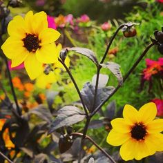 Yellow, colour of happiness E.M. #flower #nature #happy