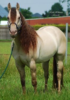 Triple Jet Cee Jay - he looks like he's not just a Fun, also another dilute of some sort. Horses And Dogs, Horses For Sale, Animals And Pets, All The Pretty Horses, Beautiful Horses, Animals Beautiful, American Quarter Horse, Quarter Horses, All About Horses