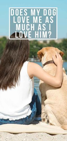 Does my dog love me? Discover whether dogs really do love their owners, and spot the signs that your dog loves you. Plus, how to tell your dog you love him! Fun Facts About Dogs, Dog Facts, Do Love, I Love Him, Signs Of True Love, Fox Red Labrador, Dog Behavior, Dog Stuff, Mom And Dad
