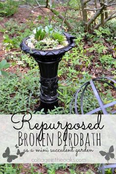 Repurposed Broken Birdbath as a Mini Succuluent Garden