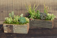 Made locally from reclaimed redwood, these little boxes are a great way to display succulents on tables and windowsills. Boxes do seep moisture, so please protect surfaces accordingly. Three Sizes. Bo