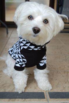 41 Best Pet fashion accessories images  a3a632b52