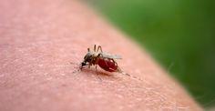 punture_di zanzare. 14 RIMEDI NATURALI E FAI DA TE