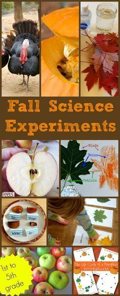 Fall science experiments for grade grade grade grade grade Apples leaves pumpkins Halloween Thanksgiving animals in autumn and 1st Grade Science, Kindergarten Science, Elementary Science, Science Classroom, Science Fair, Science For Kids, Science Penguin, Science Chemistry, Easy Science