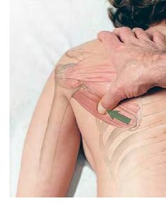 Basic Clinical Massage Therapy - Teres Major