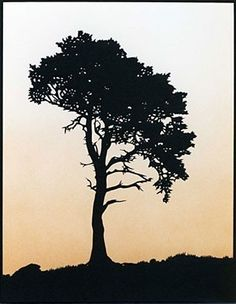 Scots Pine Tree Large by JohnSpeight on Etsy, £50.00