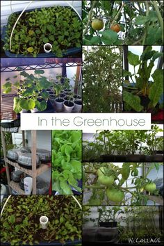 In the greenhouse..January 3, 2015