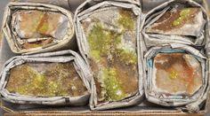 5 Piece Flat Adamite in Matrix Specimens Ojuela Mine Mapimi Durango Mexico