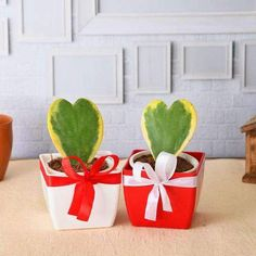 The sweetheart plant or Valentine's hoya (Hoya kerrii) is a classic gift choice for someone special. These delightful plants are very much easy to care and their unique heart shape leaves make them one of the most beautiful valentine's day gifts. Hoya Plants, Flowering Plants, Planting Flowers, Planter Accessories, Valentine Day Gifts, Valentines, Save Mother Earth, Lucky Bamboo, Rose Gift