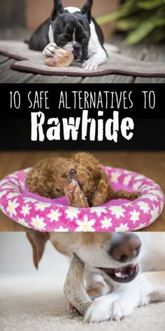 Rawhide is a vet bill waiting to happen. Instead of risking your dog's health and life, choose one of these healthy alternatives and leave the rawhide on store shelves.