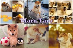 The 50 Cutest Instagram Accounts In The WholeWorld...i love this breed, looks like a fox :)