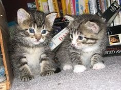 kittens ...this is pure sugar <3