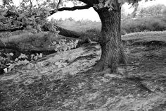 #walking #the #dog #arnhem #park #photography #iphone #wondering #art #world #nature