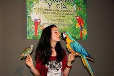 La tienda de loros de Madrid en el estreno de RIO 2 Parrot, Madrid, Bird, Parrots, Tent, Parrot Bird, Birds, Birdwatching