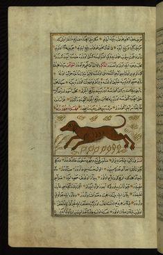A dog Wonders of Creation  by Qazwīnī 1293 was translated to Turkish in 1717  completed by Rūzmah-ʾi Nāthānī - W659