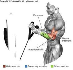 CABLE HAMMER CURL - The cable hammer curl, as all hammer grip exercises, focuses on the internal part of the biceps, in particular the brachioradialis and external brachialis biceps. This exercise involves forearms as additional muscles. Forearm Workout, Biceps Workout, Gym Workouts, Workout Routines, Cable Workout, Cycling Workout, Workout Men, Biceps And Triceps, Back And Biceps
