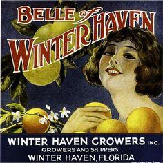 Florida FL Winter Haven Belle of Winter Haven Orange Citrus Fruit Crate Box Label Art Print