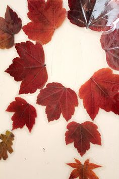 laminated autumn leaf magnets.gotta remember this next fall!