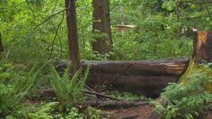 OLYMPIA – Washington State Parks and Recreation Commission is offering two free days at state parks in April.