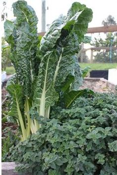 Not sure when to plant your vegetables in Melbourne? Yummy Gardens have a vegetable garden planting guide for each season, especially for those in Melbourne, Australia Spring Vegetable Garden, Vegetable Planting Guide, Indoor Vegetable Gardening, Vegetable Garden For Beginners, Vegetable Garden Design, Garden Soil, Autumn Garden, Organic Gardening, Container Gardening