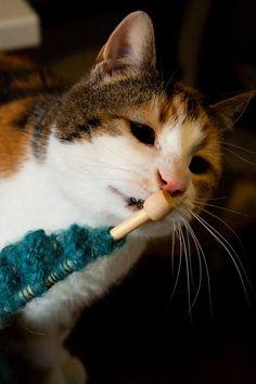 L'interesse del nostro gatto per il lavoro a maglia!