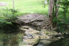 Little-Barton-Creek #Belize