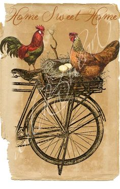 chicken rooster nest in bike basket